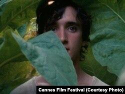 خوشحال مثل لازارو، از آلیس رورواشر، فیلمساز ایتالیائی، شریک جایزه بهترین فیلمنامه با فیلم سه رخ از جعفر پناهی