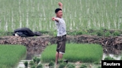 A North Korean farmer pauses to stretch as he works on Hwanggumpyong Island, located in the Yalu River, near the North Korean town of Sinuiju, June 2, 2014.