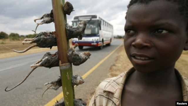 A boy displays boiled rats for sale on the main highway in Malawi's capital Lilongwe June 20, 2009.