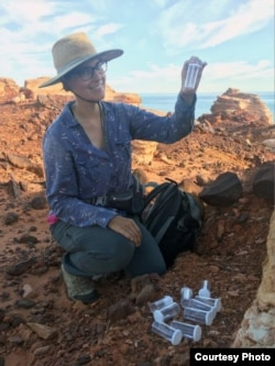 Sarah Crews collects Karaops spiders in test tubes. (Photo by Erin Parke/Australian Broadcasting Company)