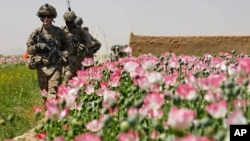 کشف و ضبط مواد مخدر در افغانستان