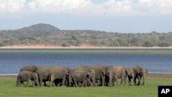 Zimbabueano queria caçar elefantes com minas antipessoais