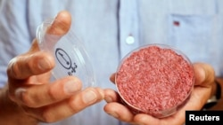 Professor Mark Post holds the world's first lab-grown beef burger during a launch event in west London, Aug. 5, 2013.