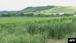 Barërat mund të përdoren për prodhimin e biokarbureve të gjelbra