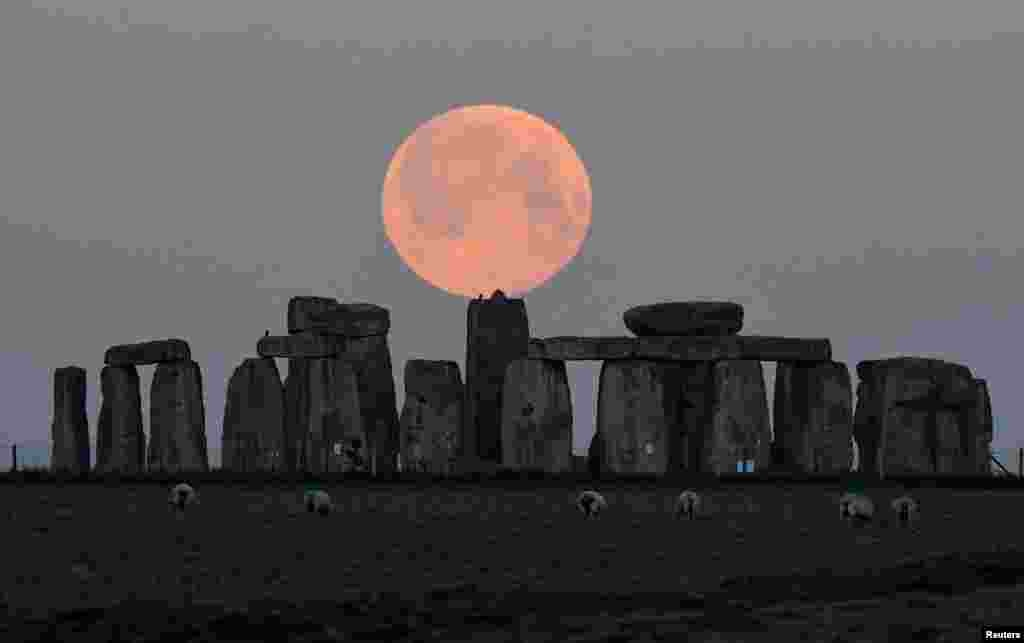 "Sheep graze as the full moon, known as the ""Super Pink Moon"", sets behind Stonehenge stone circle near Amesbury, Britain."