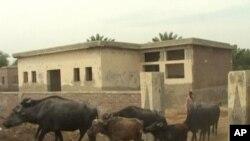 صوبہ سندھ کے شہر شکارپور میں واقع ایک گھوسٹ اسکول جہاں اب بھینسوں کا ڈیرا ہے۔