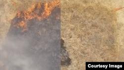 Under the supervision of CalFire, the researchers performed test burns on a grassy roadside area near San Luis Obispo, California, to gauge the effect of the fire-retarding hydrogel. The images above show untreated (left) and treated (right) areas.