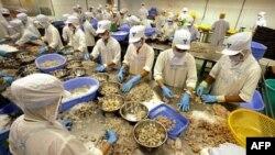 Công nhân làm việc tại nhà máy chế biến và xuất khẩu thủy sản Camimex ở Cà Mau.