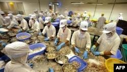 Công nhân làm việc tại nhà máy chế biến thủy sản Camimex ở Cà Mau