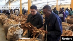 FILE - Buyers check the quality of tobacco during the last day of the selling season at Tobacco Sales Floor, July 15, 2015. The Cameroon government has asked farmers not to plant for the coming growing season until the government can assure them there will be sufficient rainfall.
