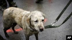 搜救犬協助搜尋工作