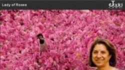 نمایش فیلم «بانوی گل سرخ» در دانشگاه لس آنجلس