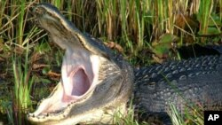 An enthusiastic welcome to the Okefenokee!