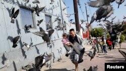 在墨西哥边境城市蒂华纳,一名来自中美洲的移民大篷车成员抱着女儿在鸽子中间穿行,他准备申请在美国避难(2018年4月28)。
