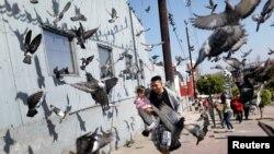 2018年4月28在墨西哥邊境城市蒂華納,一名來自中美洲的移民大篷車成員抱著女兒在鴿子中間穿行,他準備申請在美國避難。