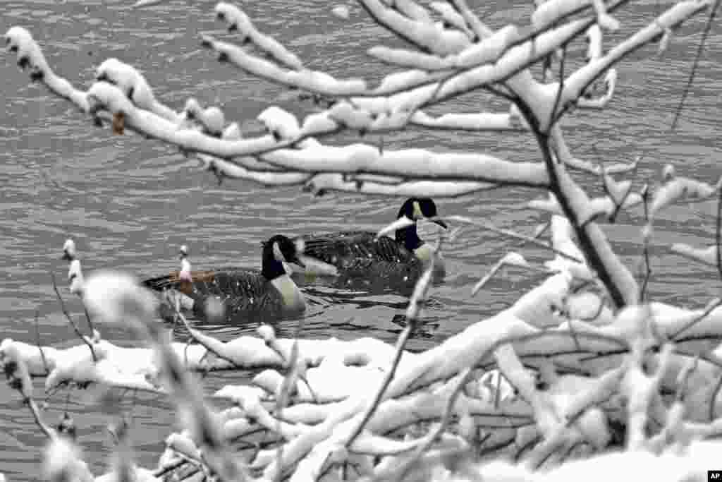 طبیعت برفی رودخانه شهر پیتزبورگ در ایالت پنسیلوانیا