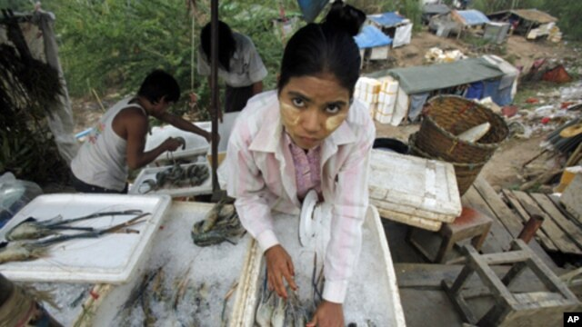 A migrant worker from Burma arranges shrimps at her shop in the Thai border town of Mae Sot, Nov. 7, 2010. (file photo)