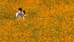 Sepasang muda-mudi yang mengenakan masker, mengambil swafoto (selfie) di tengah lapangan bunga kosmos di Olympic Park di Seoul, Korea Selatan, Kamis, 23 September 2021. (Foto: AP)