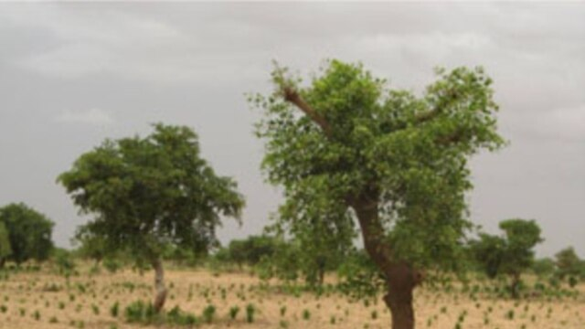 Nearby trees can help crops grow better