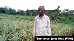 Un propriétaire d'un champ d'ananas dans la localité d'Awae où l'utilisation des pesticides se fait sans grande connaissance, 11 mai 2017. (VOA/Emmanuel jules Ntap)