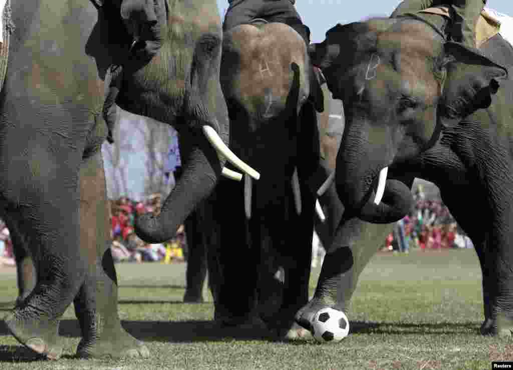 Os elefantes também jogam futebol - final da corrida dos elefantes perto de Katmandu , Nepal
