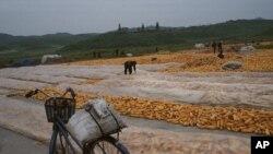 지난 2012년 9월 북한 개성 인근 도로변에 수확한 옥수수를 널어놓았다.