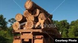 La nouvelle règlementation européenne exige des importateurs et des commerçants de bois une plus grande traçabilité