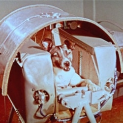 The Soviets launched a dog named Laika on Sputnik 2 in November 1957. She survived just several hours in space.
