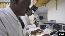 Promene u borbi sa ovom bolešću uključivale bi i primenu novih mera, između ostalog genetsku modifikaciju
