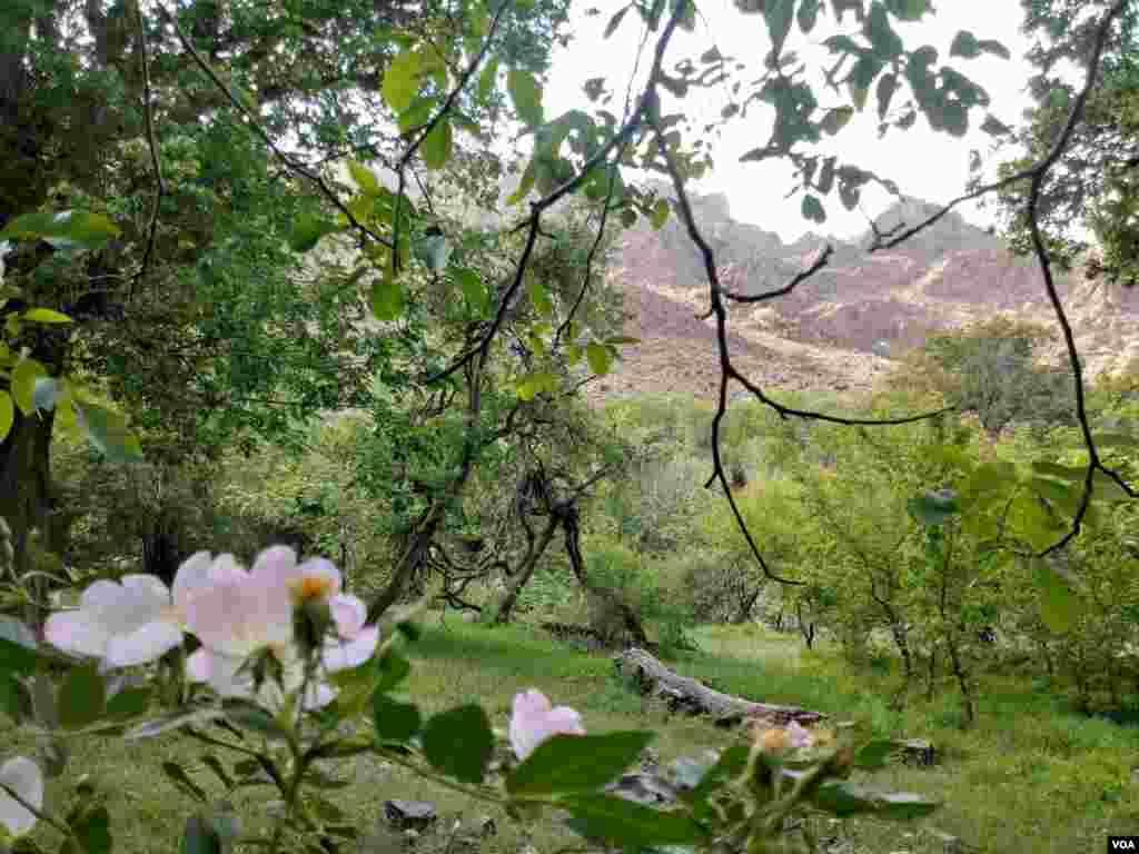 کرمان- شهرستان بم، روستای حمید عکس: صبا (ارسالی شما)