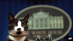 Кіт Клінтонів Сокс на трибуні у кімнаті для прес-брифінгів у Білому домі, 19 березня 1994 року