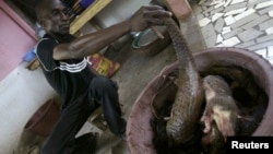 Un employé met en place des morceaux de crocodile dans un restaurant Le Zo chez Felix à Abidjan, le 11 avril 2008.