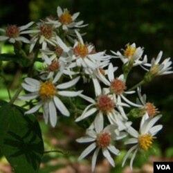 Bunga-bunga seperti ini tampak yang di sepanjang jalur pendakian.