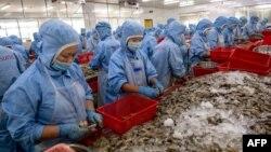Công nhân làm tôm tại Công ty Hải sản Khánh Sủng ở Mỹ Xuyên của tỉnh Sóc Trăng. Lao động giá rẻ đã giúp thu hút đầu tư nước ngoài vào Việt Nam trong những thập kỷ qua nhưng quốc gia Đông Nam Á đang tìm cách đưa nền kinh tế phát triển tiên tiến hơn.