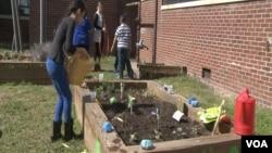 美國維吉尼亞州一家小學教學生愛護地球的課外活動。(視頻截圖)