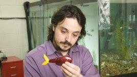 "Mechanical engineer Maurizio Porfir holds one of his ""robofish"" creations in his New York lab. (Polytechnic Institute of New York University)"