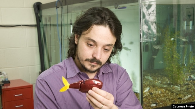 "Mechanical engineer Maurizio Porfir holds one of his ""robofish"" creations in his New York lab. (Polytechnic Institute of New York University)"