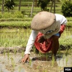 Pengamat menyebut peningkatan kesejahteraan petani menjadi kunci kesejahteraan bangsa.