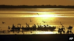 In this Sept. 3, 2002 file photo, birds find refuge at sunset on the surface of the Salton Sea, one of the largest stops for migratory birds in North America. (AP Photo/Reed Saxon, File)