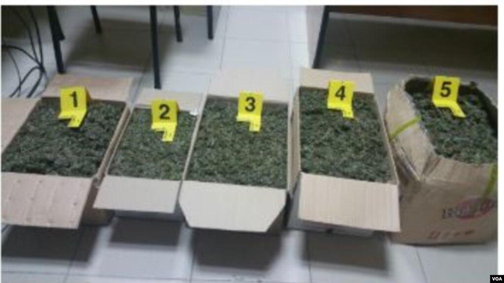 Berat, masa disiplinore ndaj policëve pas zbulimit të drogës