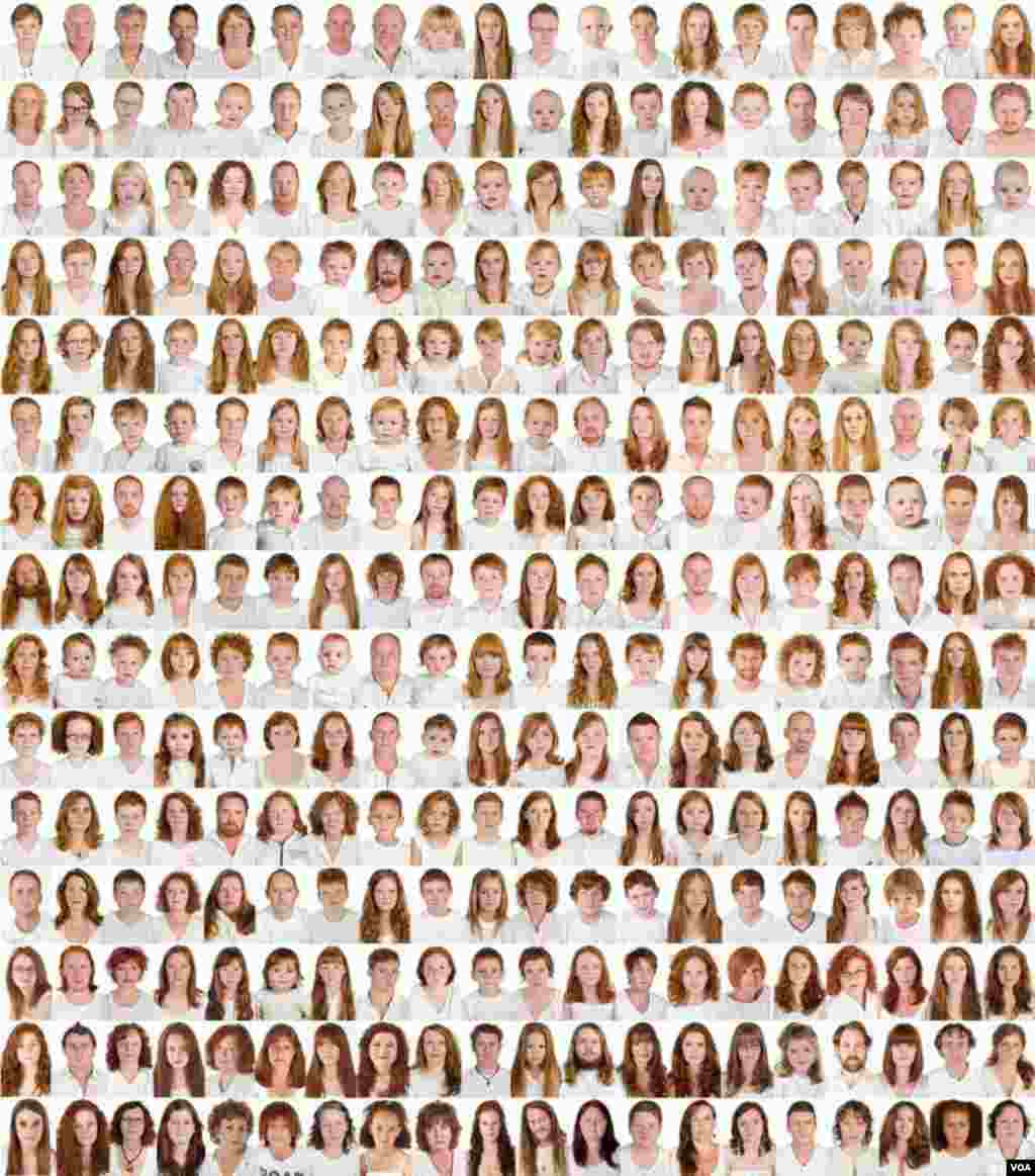 "The 500 gingers photographed by Pokroy on a panel that's part of the ""I collect gingers"" exhibition (A. Pokroy)"