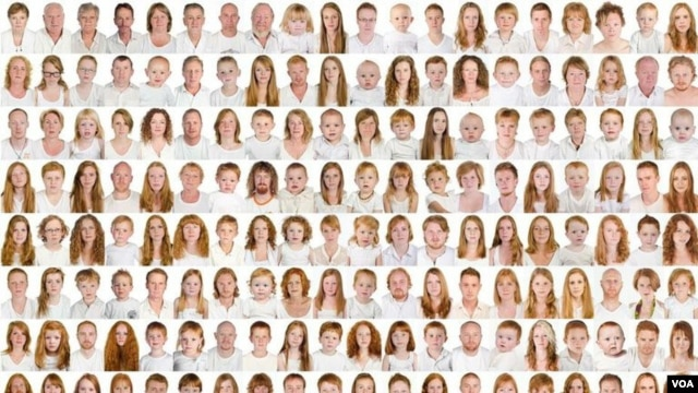 "The 500 gingers photographed by Pokroy on a panel that's part of the ""I collect gingers"" exhibition. (A. Pokroy)"