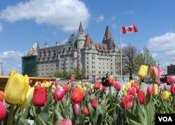 Tháng Năm là thời gian của lễ hội Uất Kim Hương - The Canadian Tulip Festival. (Hình: Đinh Yên Thảo)