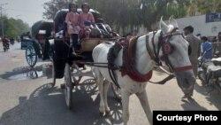 حق نواز کا بادل اور گھوڑا گاڑی جس پر اسکول کے بچے سوار ہیں۔
