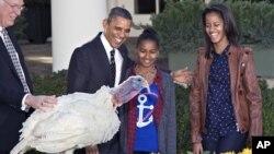 """Presiden AS Barack Obama dan anak-anaknya, Sasha serta Malia, melakukan tradisi """"pengampunan"""" pada seekor kalkun. (AP/J. Scott)"""