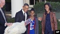 """感恩节餐桌上少不了火鸡,不过这只叫Cobbler的火鸡永远逃过此劫。11月21日,奥巴马在两位千金及全国火鸡联合会主席的观看下,宣布""""总统大赦""""。Cobbler将到乔治.华盛顿故居维农庄园养老终生。但白宫的感恩节大餐还是要有火鸡来献生。"""