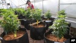 Medical Marijuana Kids