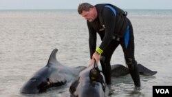Dos animales murieron y los rescatistas han empezado la búsqueda de otros, que fueron divisados antes del anochecer.