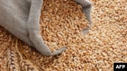 В Україні існує проблема з експортом зернових