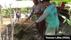 Petani Poso belajar pupuk organik (Foto: VOA/Yoanes Litha)